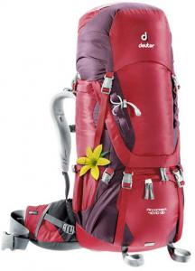 Deuter Aircontact 60 + 10 SL Backpack Aubergine / Cranberry Back