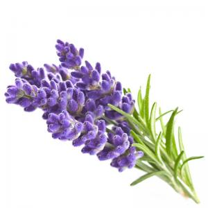 Click And Grow Navulling - Lavendel