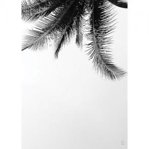 SB Studio Poster 50 X 70 Cm - Under The Palm Tree