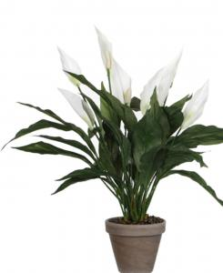 Mica Decorations - Spathiphyllum Maat In Cm: 50 X 40 Wit Pot
