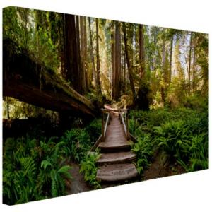 Trap Van Gevallen Bomen In Jungle - Fotoprint Op Canvas 120x80